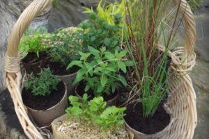 Le Jardin d'herbes - Bazouges-la-Pérouse