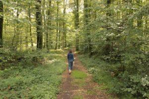 Balade au bois de la Motte