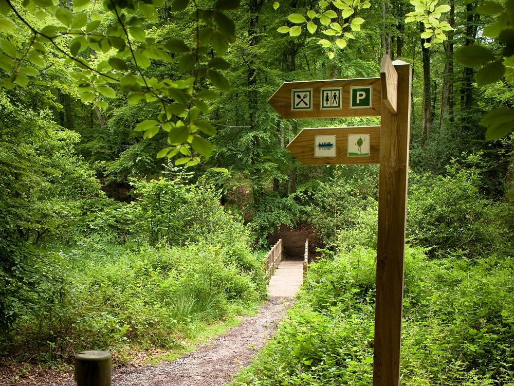 Pont en forêt de Villecartier