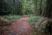 Chemin des Bogues - Chemin vers la Vallée Olive